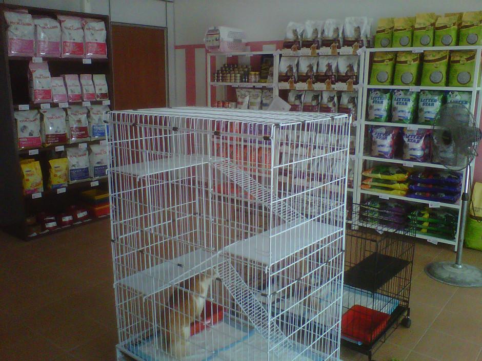 katzen pet shop