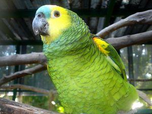South American Rainforest Animals