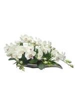 54b607e17f72257c2dde535b_orchid-3.jpg