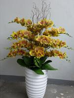 54b607ff5fd9ff7a2d664e79_orchid-7.jpg