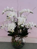 54b6080e9120f51c0ea5ab53_orchid-9.jpg