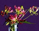 Tropifame Floral Design School Pte Ltd Photos
